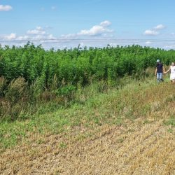 Amazing day at Organic Zenon Hemp Farm